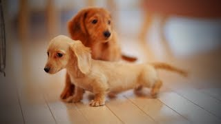 Download Cute Puppies 😂🐶 Funny and Cute Little Dogs (Part 2) [Funny Pets] Video