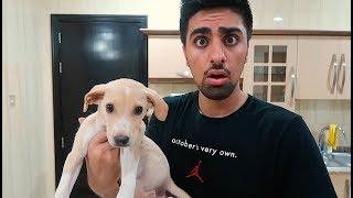 Download WE GOT A PUPPY !!! *NOT CLICKBAIT* Video
