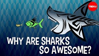 Download Why are sharks so awesome? - Tierney Thys Video