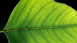 Download Plant Leaf - Leaves - lesson - Education videos for kids from makemegenius Video