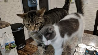 Download Kitten Close Up 2017-11-26 Video