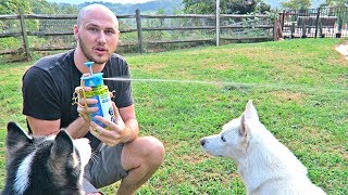 Download Best Water Bottle Ever! Video
