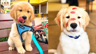 Download Baby Dogs - Cute and Funny Dog Videos Compilation #15 | Aww Animals Video