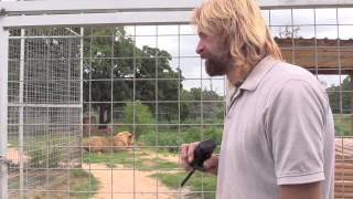Download Tiger Attacks Dumb Guys Hose (Joe Exotic TV) Video