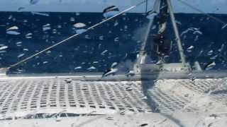 Download 30 Knots On the Nose - FP Lavezzi 40 foot Catamaran Video