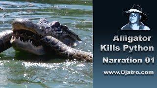 Download Alligator Attacks Python 01 Narration Video
