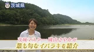 Download 磯山さやかの旬刊!いばらき『常陸大宮の清流』(平成28年7月1日放送) Video