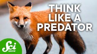 Download Predators & Prey | SciShow Talk Show Video