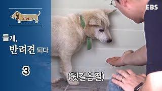Download 세상에 나쁜 개는 없다 - 들개, 반려견 되다 #003 Video