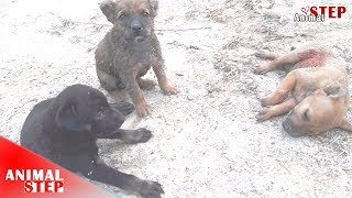 Download Rescue Two Puppies During They're Watching Their Lifeless Brother Video