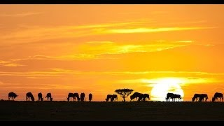 Download ► THE GREATEST ANIMAL MIGRATION (HD, Full Documentary) Video