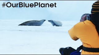 Download Filming On Thin Ice In Antarctica #OurBluePlanet - BBC Earth Video
