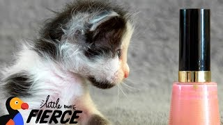 Download Watch This Micro-Mini Kitten Grow Up - THUMBELINA | The Dodo Little But Fierce Video