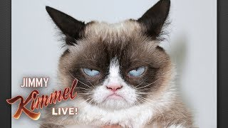 Download Rest in Peace Grumpy Cat Video