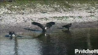 Download SWFL Eagles ~ Dad Shows The Kids How To Take A Real Bath 4.5.18 Video