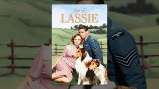 Download Son Of Lassie Video