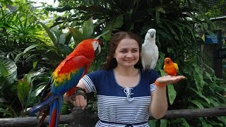 Download Kuala Lumpur Bird Park-2016 Video