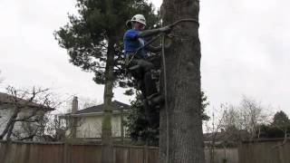Download How to use tree climbing spurs/spikes Video