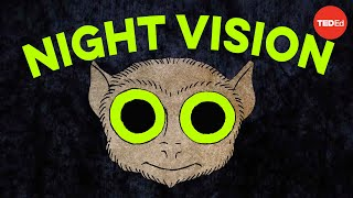 Download How do animals see in the dark? - Anna Stöckl Video