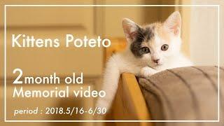 Download 子猫のぽてと・生後2ヶ月記念動画【高画質】 Video
