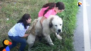 Download Family Adopts Sweetest Dog Found On Side of the Road | The Dodo Video
