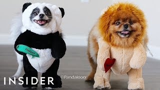 Download Turn Your Dog Into A Walking Teddy Bear Video