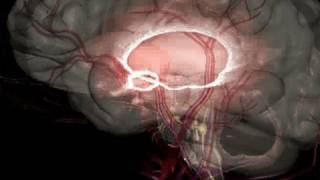Download 10 Truths About Epilepsy (Epilepsy #7) Video
