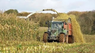 Download Claas Jaguar 900 At Work ! Ensilage mais 2014 By Tharsile . Video