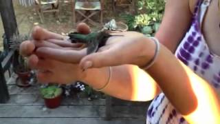 Download To catch a humming bird Video