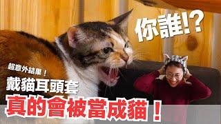 Download 超意外!戴貓耳頭套真的會被當成貓!【好味貓日常】EP60 Video