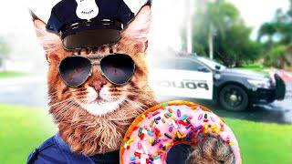 Download BRAVE CAT Video