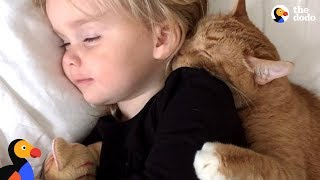 Download Senior Cat Loves These Little Girls More Than Anything - BAILEY | The Dodo Video