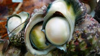 Download Japanese Street Food - GIANT SEA SNAIL Seafood Okinawa Japan Video