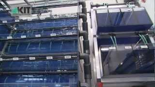Download European Zebrafish Resource Center (EZRC) at KIT Video