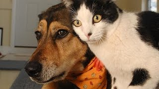 Download Funny Cats and Dogs Compilation Video