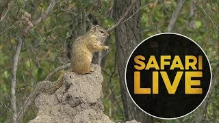 Download safariLIVE - Sunrise Safari - May 27, 2018 Video