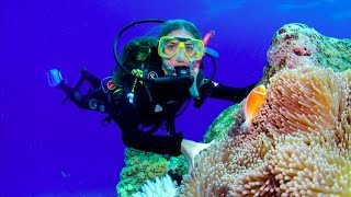 Download Awesome Great Barrier Reef! Video
