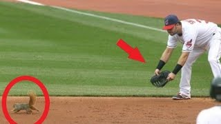 Download MLB Funny ″We Don't See That Everyday″ Moments ᴴᴰ Video