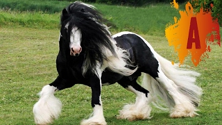 Download 10 Most Beautiful Horse Breeds In The World Video