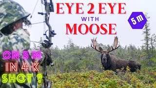 Download First 4K Moose and Caribou hunt Video