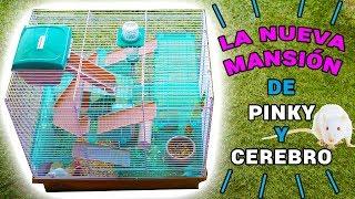 Download NUEVA MANSIÓN RATITAS DE LABORATORIO PINKY Y CEREBRO | El Gallinero de Mike Video
