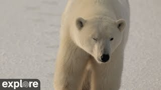 Download Cape West Camera - Churchill Cam, Wapusk National Park powered by EXPLORE.org Video