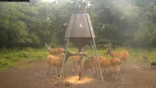 Download Big Buck Bachelor Herd Returns v.2016.7.2 Video