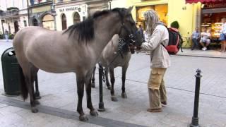 Download Konie i ich właściciel na egzotycznym spacerze po krakowskim rynku Video