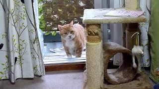 Download 控えめな猫~入っちゃいけないと思ってるゴン Cat Gon thinks he shouldn't come in Video