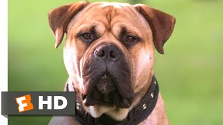 Download See Spot Run (2001) - The FBI's Top Dog Scene (3/8) | Movieclips Video
