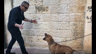 Download 500 دولار مكافئه لمن يفك هذا الكلب من رقبته ومعك ٣٠ يوم تطعمه وتصادقه مع جمال العمواسي Video