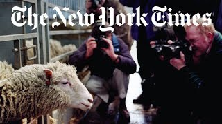 Download The Story of Dolly the Cloned Sheep   Retro Report   The New York Times Video