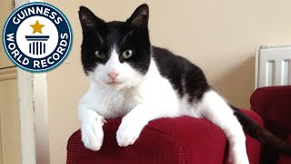 Download Loudest Purring Cat - Guinness World Records Video
