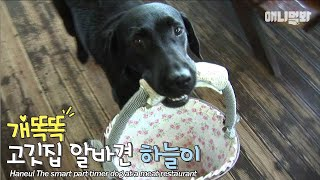 Download 사장님.. 오늘 정산이 안맞는데요?ㅣ7th year working at the meat restaurant..the dog is better than people LOL Video